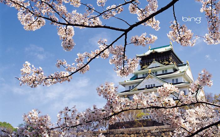 日本风景高清美图~樱花