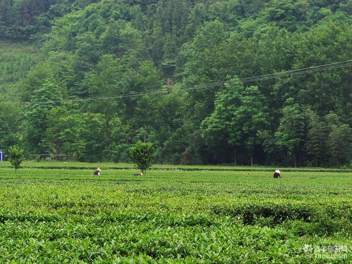 """牌魔芋精粉,紫阳县茶厂的""""神云""""牌富硒茶等都是安康市的图片"""