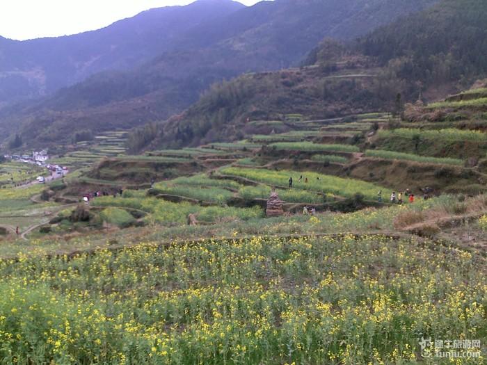 婺源茶树大多生长在高山深谷中
