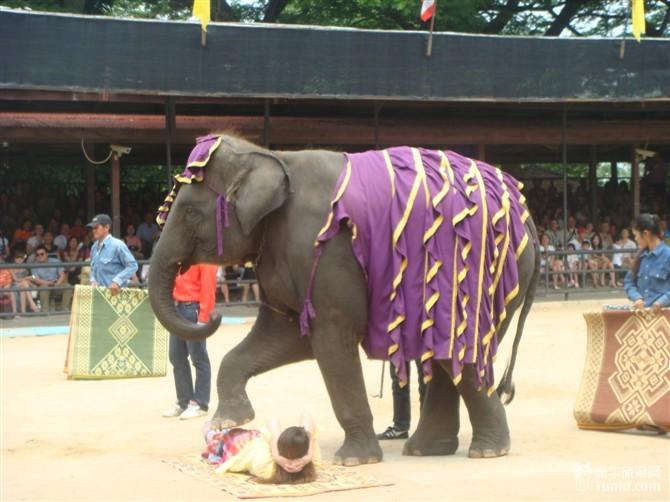 大象是泰国的吉祥动物