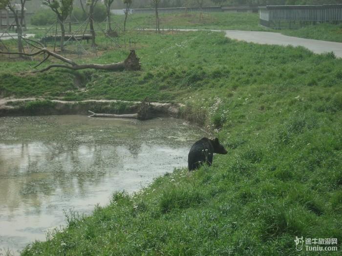 【游记正文】五一上海野生动物园——动物大教学