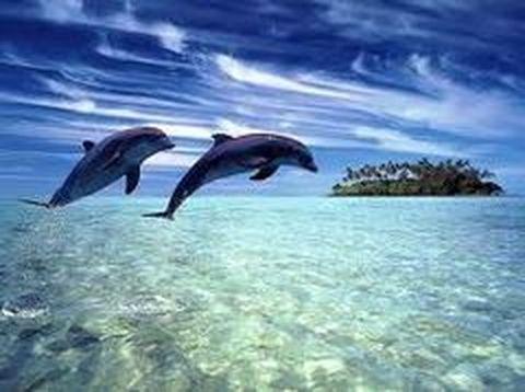 壁纸 动物 海洋动物 桌面 480_358